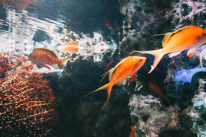 桃園青埔-XPARK水族館-23