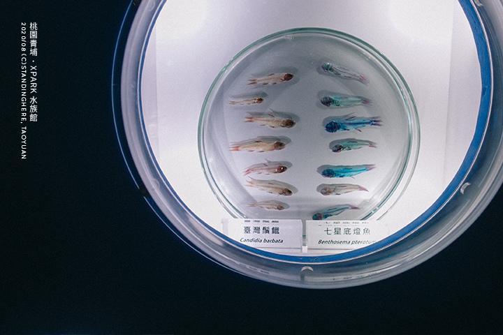 桃園青埔-XPARK水族館-56