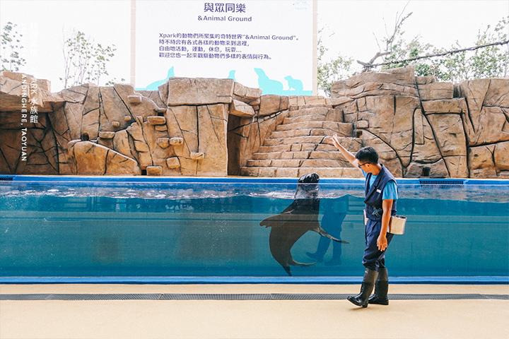 桃園青埔-XPARK水族館-83
