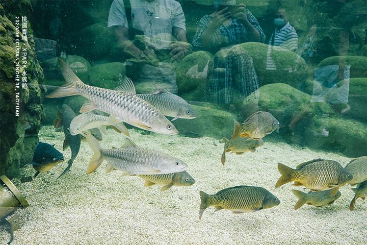桃園青埔-XPARK水族館-88