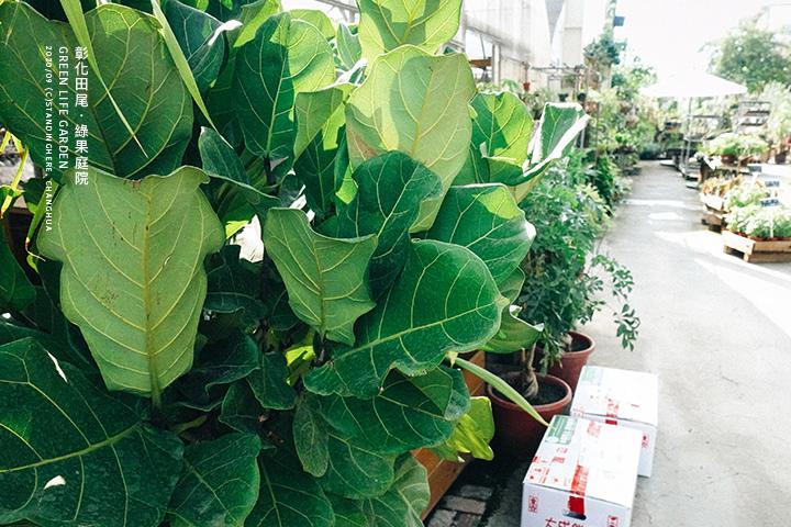 彰化田尾-綠果庭院-22
