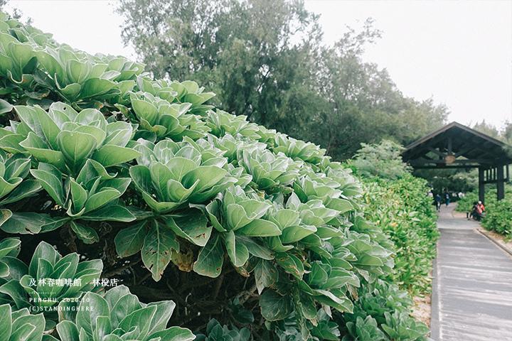 澎湖-及林春-06