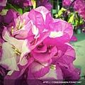 2009-0128-spring1.jpg