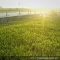 2009-0128-spring3.jpg