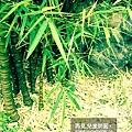 2009-0509-兒童樂園7.jpg
