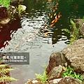 2009-0509-兒童樂園10.jpg