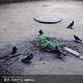 tokyo2-11.jpg