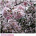 sakura-04.jpg