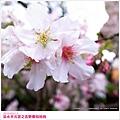 sakura-09.jpg