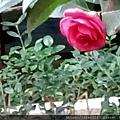 IMG20201207112439.jpg