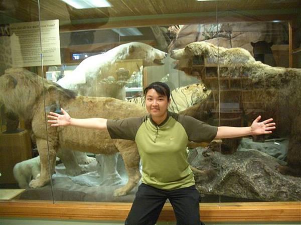 科學博物館-北極熊標本
