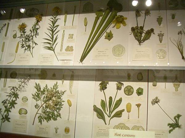 哈佛自然歷史博物館-玻璃花glass flower