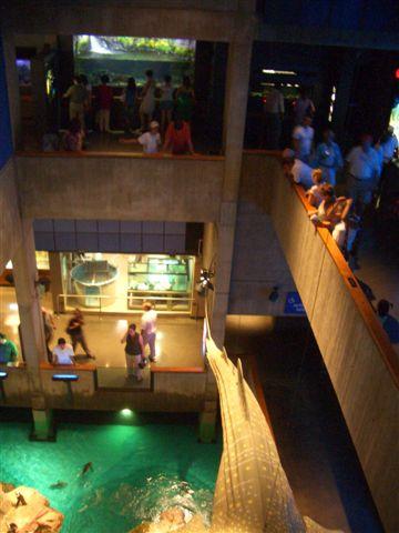 新英格蘭水族館一景