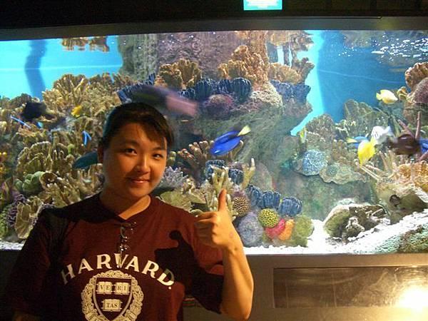 新英格蘭水族館-熱帶魚