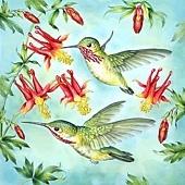 蜂鳥吸取花蜜