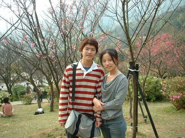 陽明山的櫻花