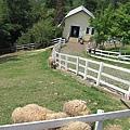 羊圈和羊宿舍