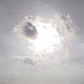 那片雲很像羊~