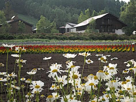 花田與農舍