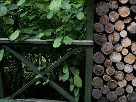 木材與綠葉
