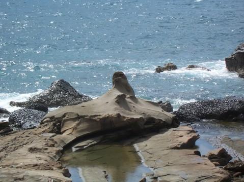 受困的海豹