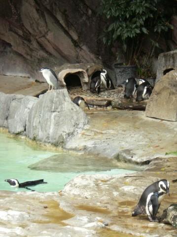 企鵝與夜鷺