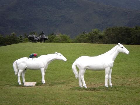馬背與牛背