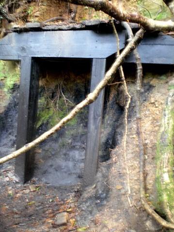 礦脈與樹籐