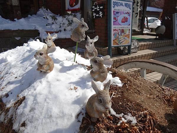 餐廳前的兔子