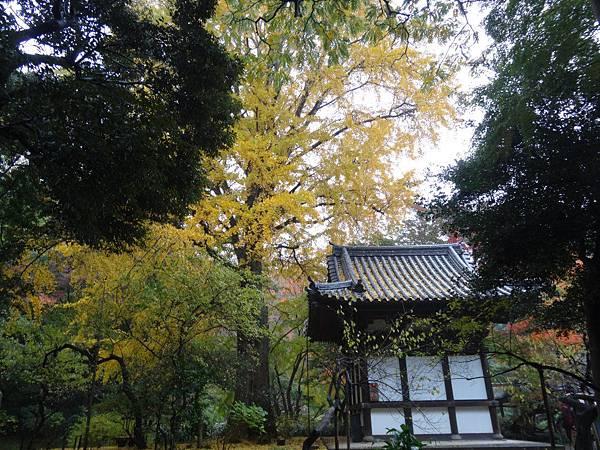 s三溪園12.JPG