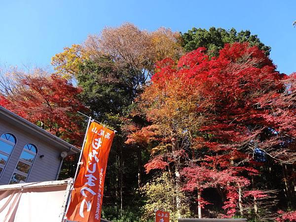 s高尾山34.JPG