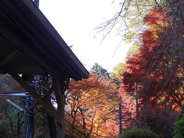 s高尾山40.JPG