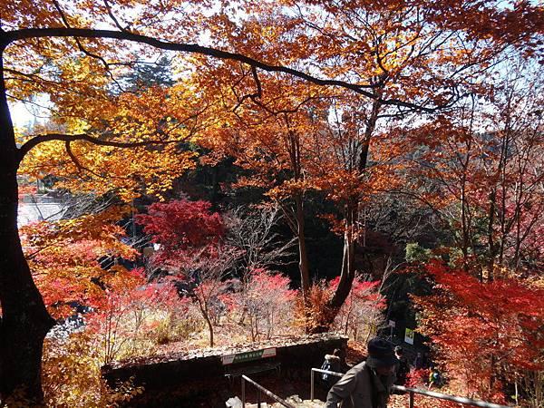 s高尾山49.JPG