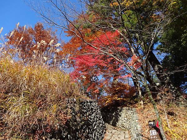 s高尾山52.JPG
