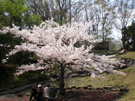 櫻並木小公園