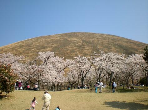 櫻花之里2