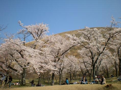 櫻花之里3