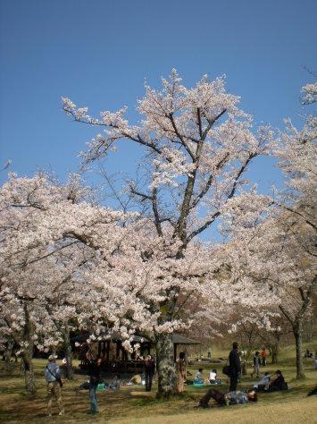 櫻花之里4