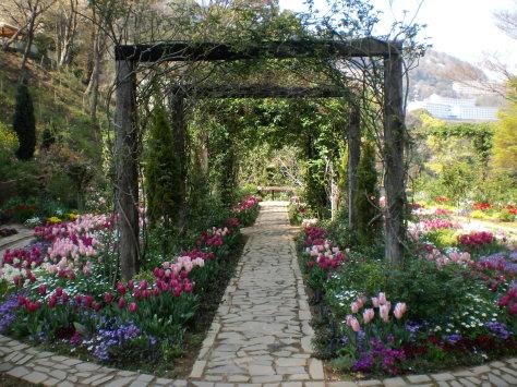 鬱金香花園