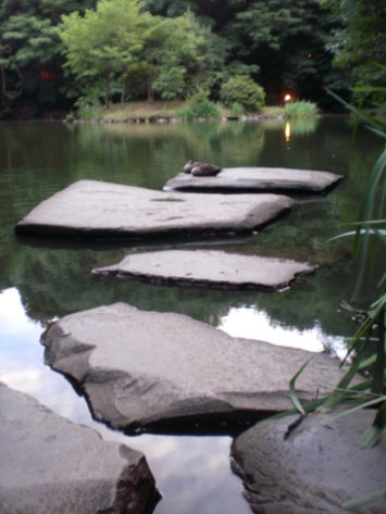 三四郎池水鴨