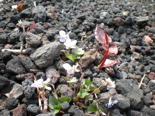 石縫的小花.jpg