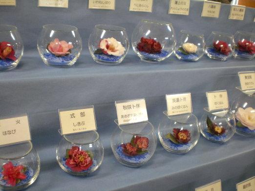 茶花品種.jpg