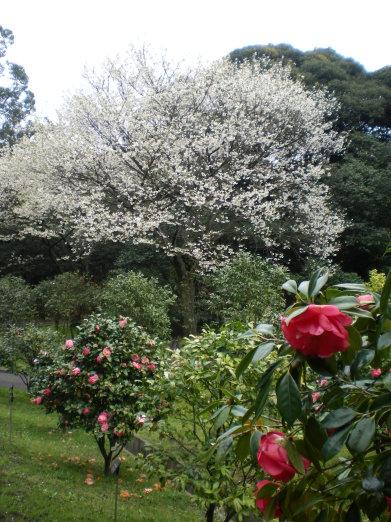 茶花園.jpg