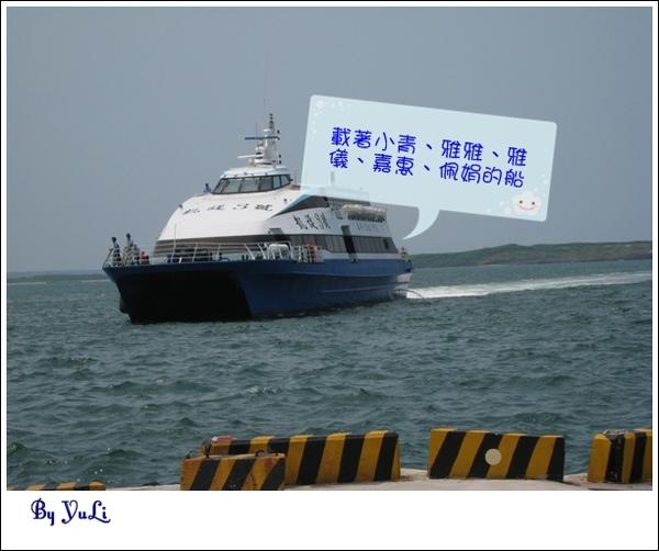 天人菊3.JPG