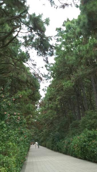 國家公園松林.jpg