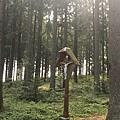 林中十字架.JPG