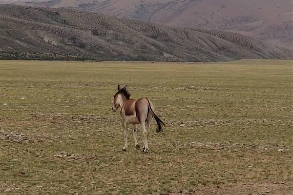 馬2.jpg