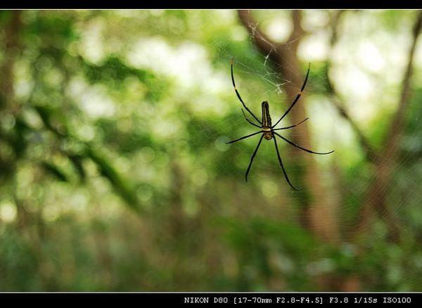 象山步道上的蜘蛛