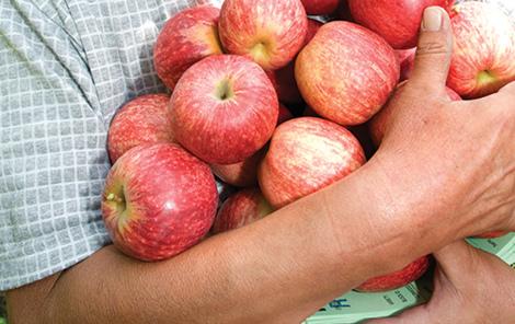 OANZ_apples_470