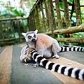 2015_Singapore Zoo_Hi-Res_17 (Danny Santos).jpg